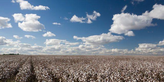 June 2013  Executive Cotton Update