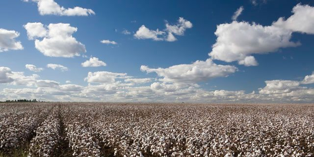 August 2013  Executive Cotton Update