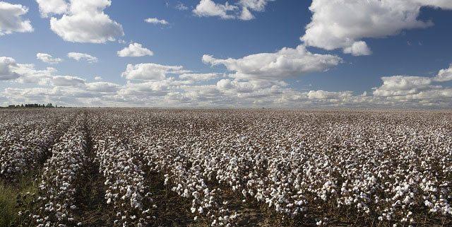 October 2013  Executive Cotton Update