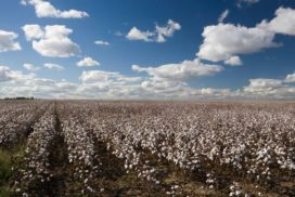 Part 4:Chinese Cotton Policy Reforms & Outlook
