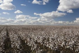 June 2014  Executive Cotton Update