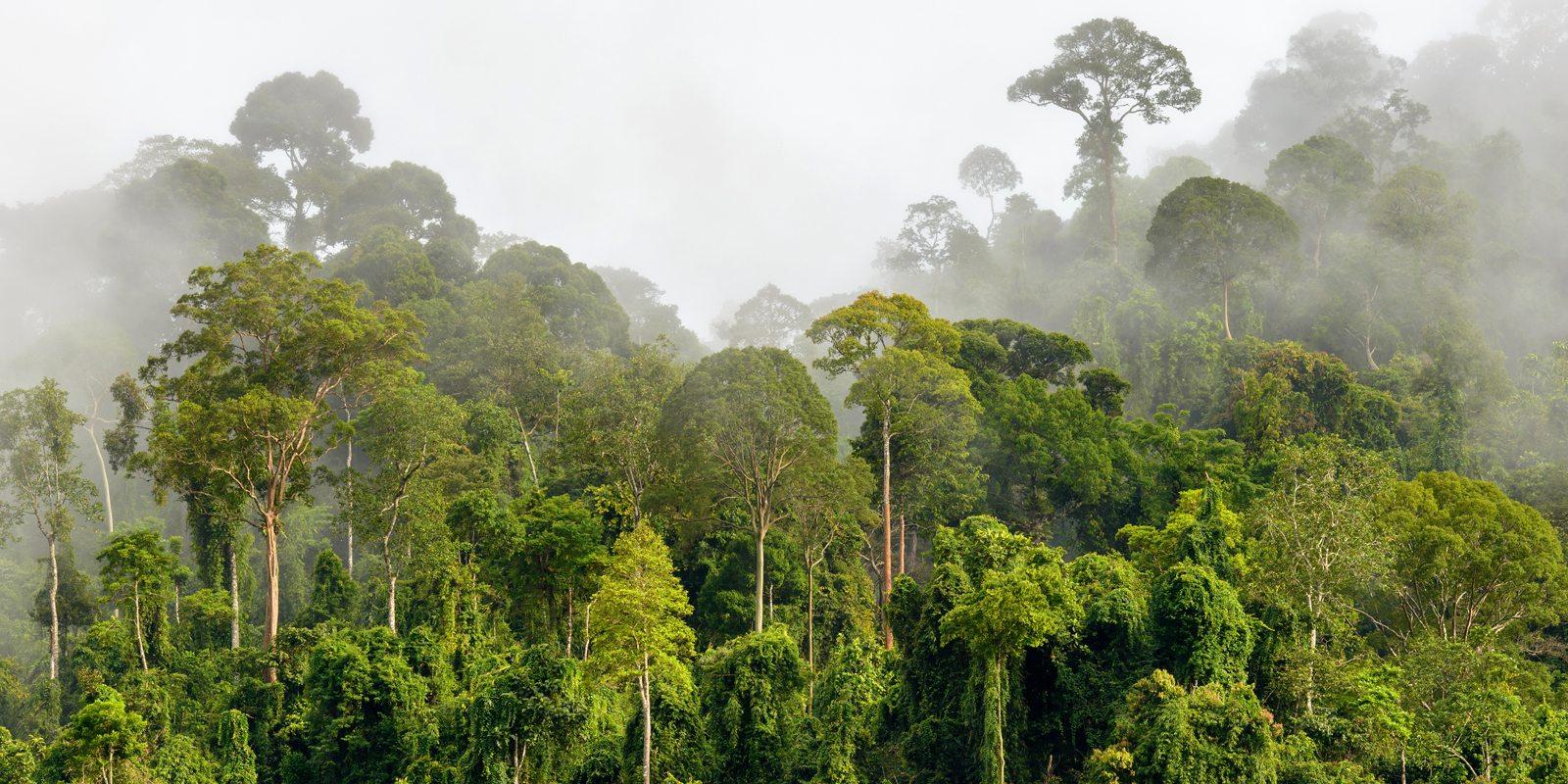 Eco Concerns